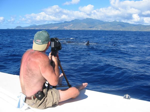 Dominica - Video the Whales 1